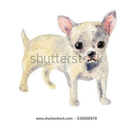 Dog Biologic Stock Photos, Royalty.