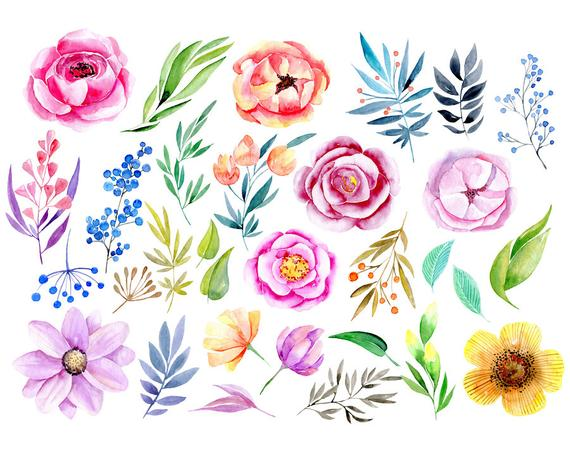 Watercolor floral clipart roses peony leaves branches flower.