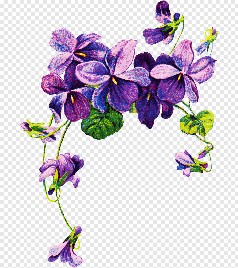 Purple lilacs, African violets Purple Flower, watercolor.