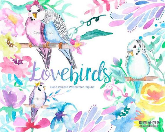 water color love birds clipart 20 free Cliparts | Download images on