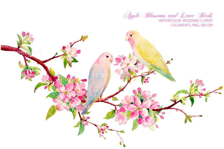 Wedding clipart Hand painted watercolor cherry blossoms.