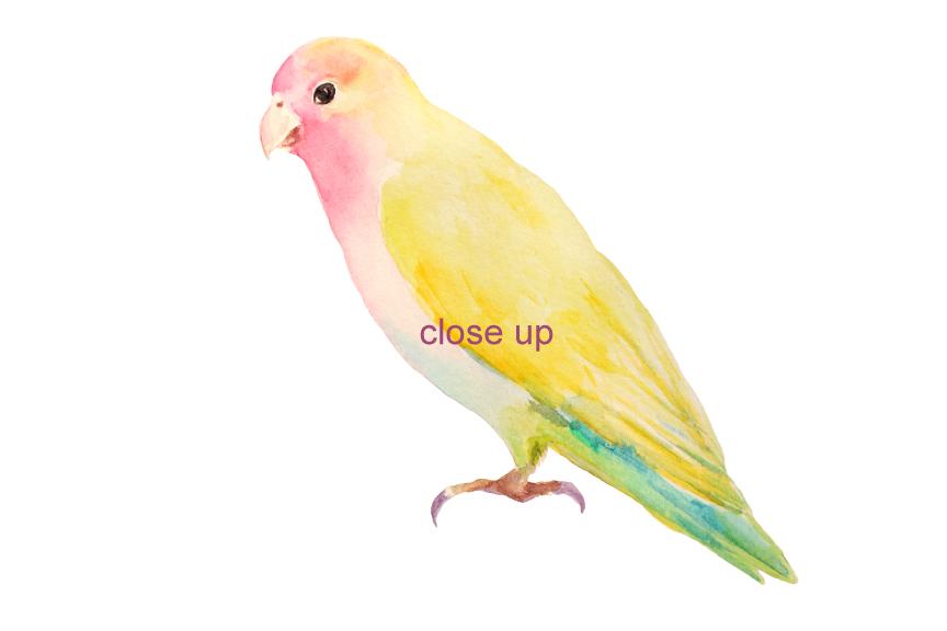 Watercolor Clipart Apple Blossom Love Birds by Cornercroft.