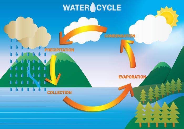Water Cycle Diagram Vector.