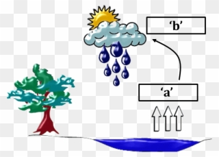 Diagram Of Water Cycle.