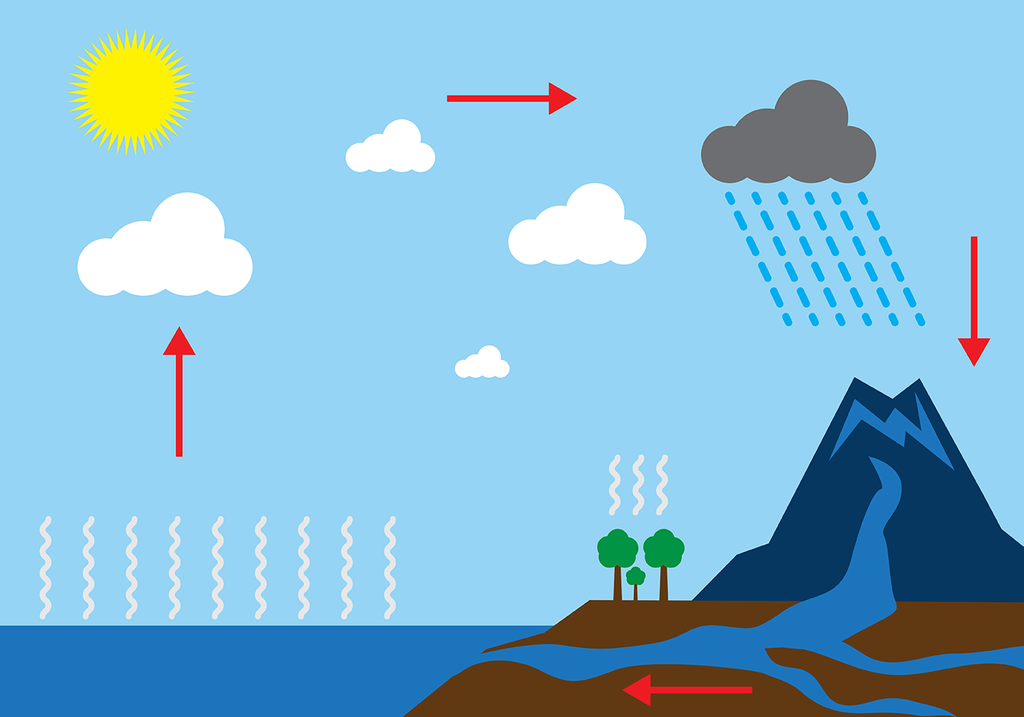 P5 Science Water cycle Diagram.