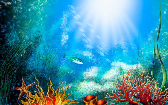 50+ Best Aquarium Backgrounds to Download & Print.
