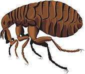 Flea Clip Art.