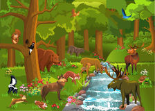 Forest Animals Coming To Drink Water Stock Image.