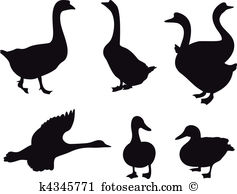 Waterfowl Clipart Illustrations. 568 waterfowl clip art vector EPS.