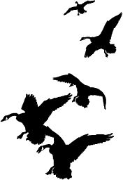 Waterfowl Clipart.
