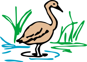 Waterfowl Clip Art Download.