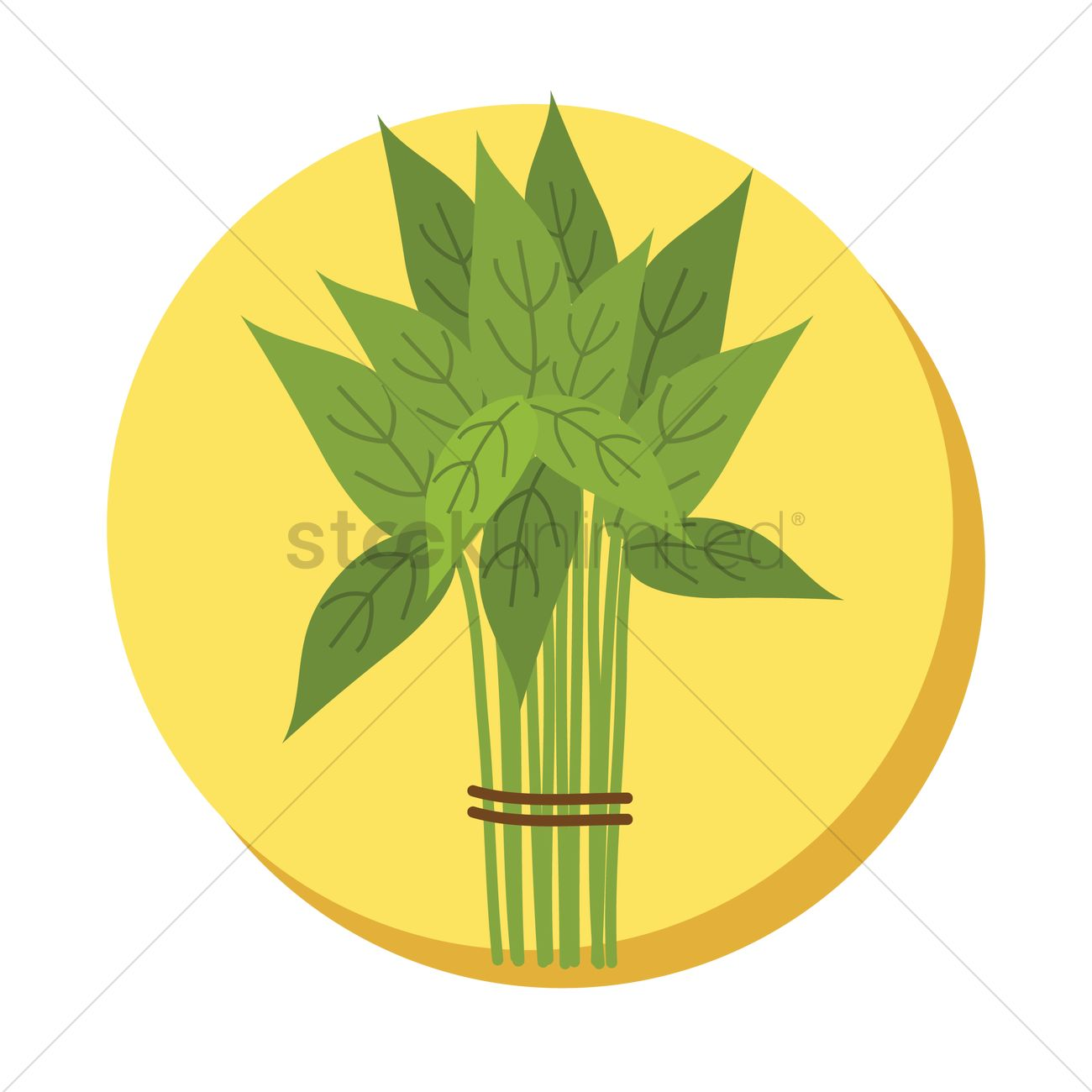 Water spinach Vector Image.