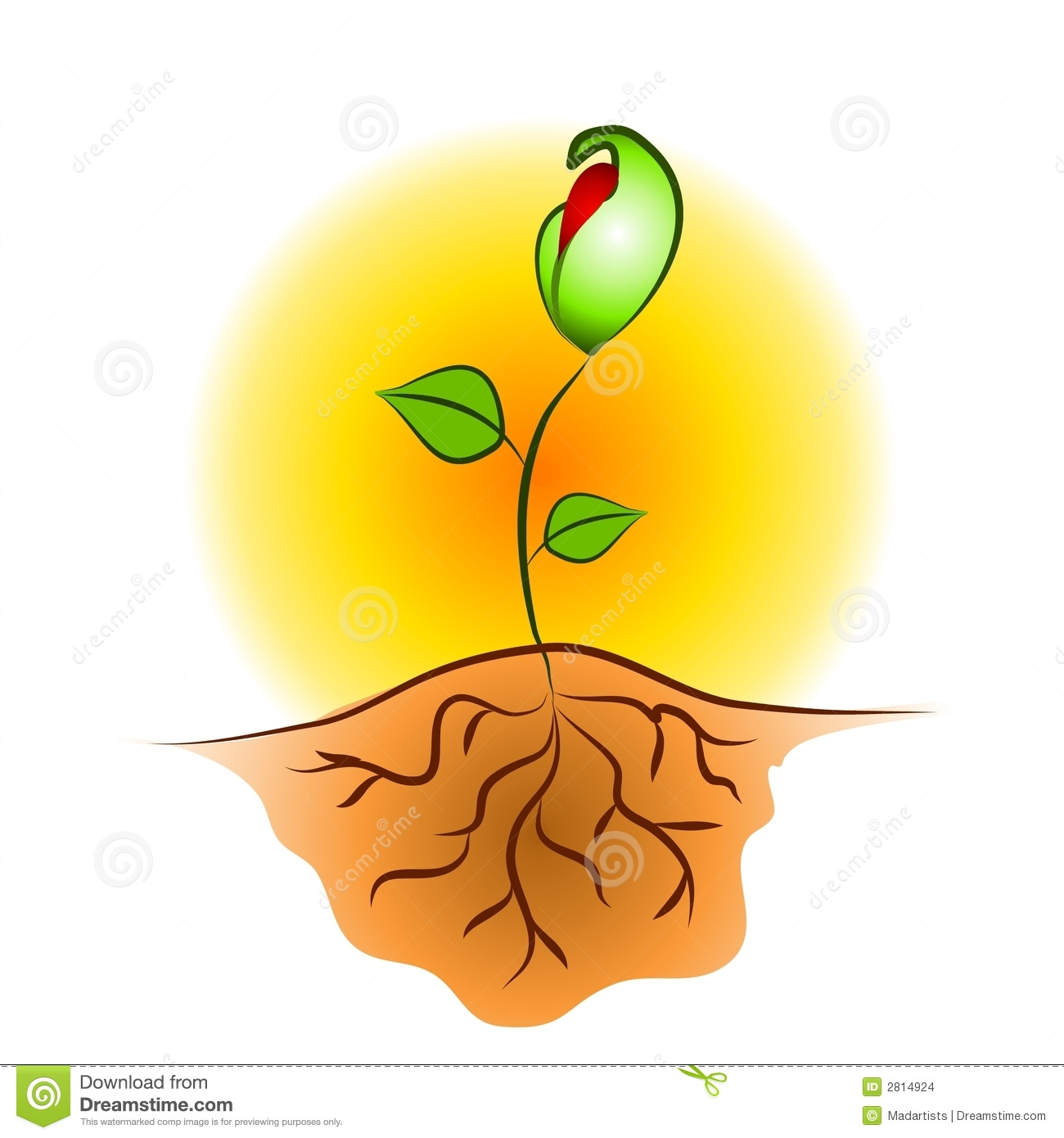 Free plant roots taking water clipart.