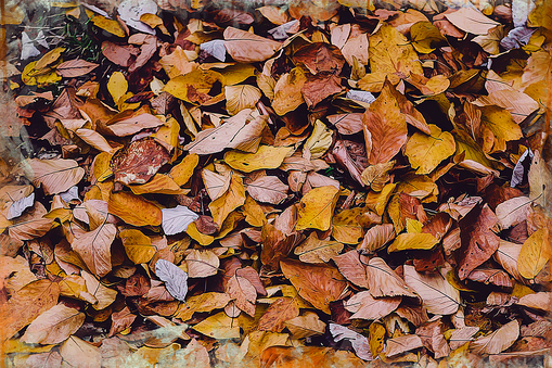 Hickory photo background, transparent png images and svg.