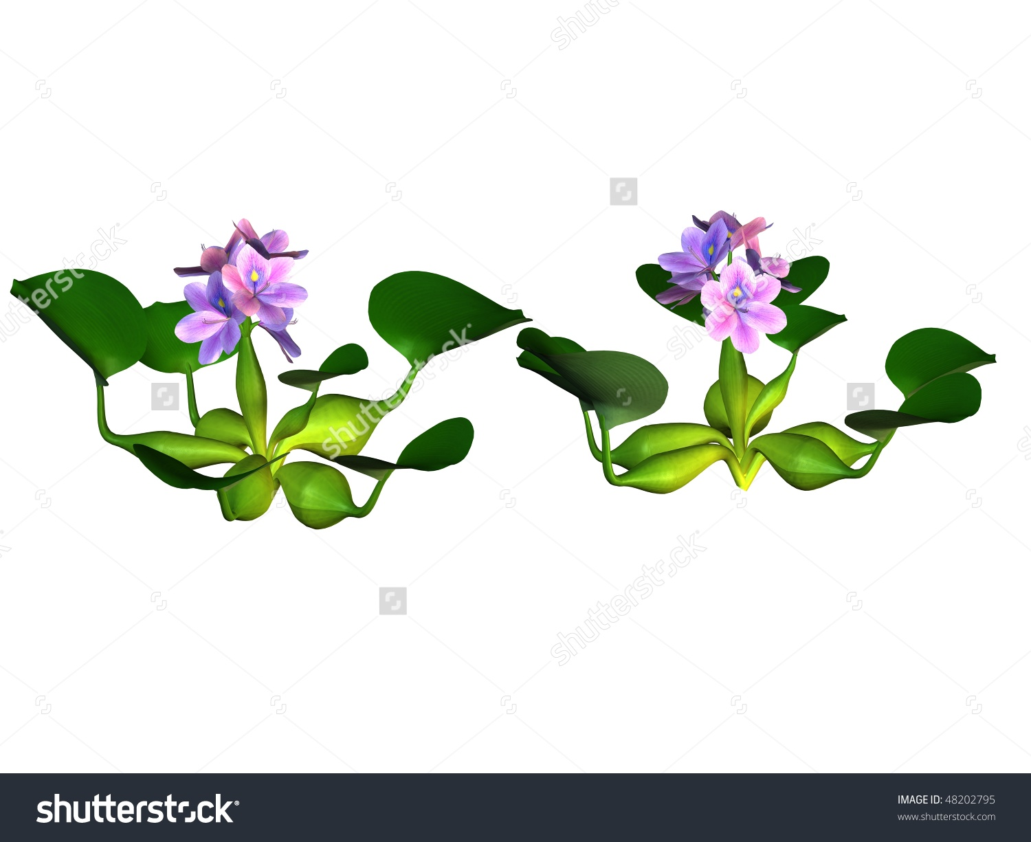Water hyacinth clipart.