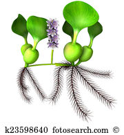 Water hyacinth Stock Illustration Images. 8 water hyacinth.