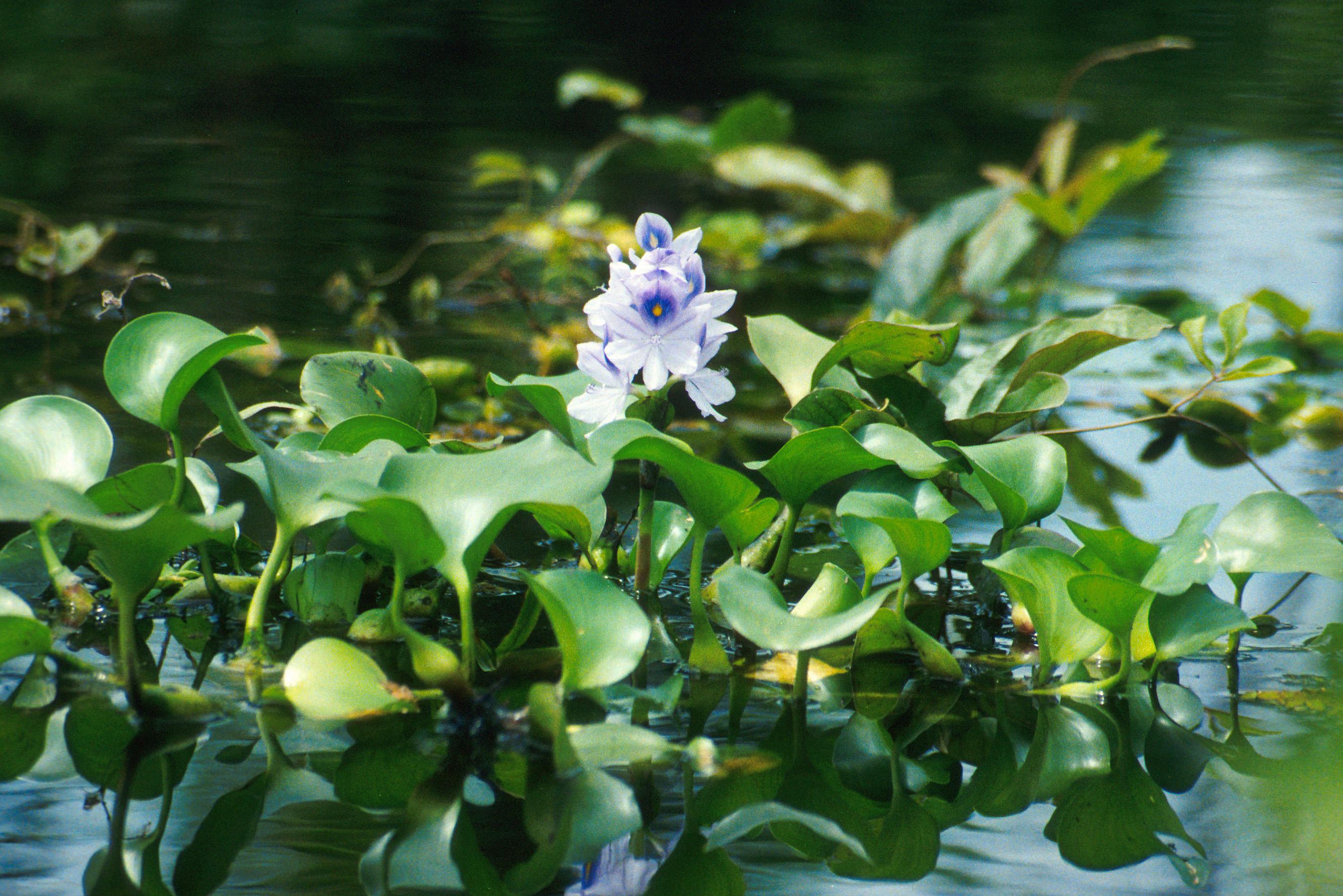 1000+ images about Plantas Hiperacumuladoras on Pinterest.