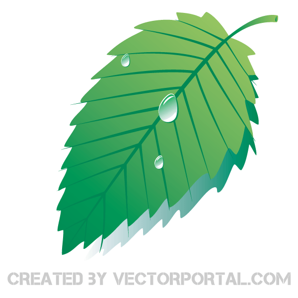 Leaf With Water Drop Clipart.