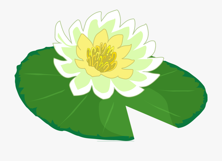 White Flower Water Lily Clipart The Cliparts Png.
