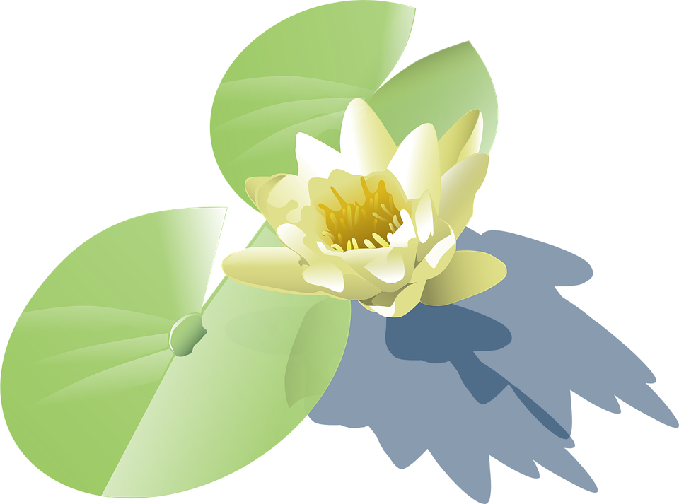 Water Lily Leaf Clipart Clipground
