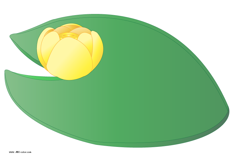 water lily leaf clipart