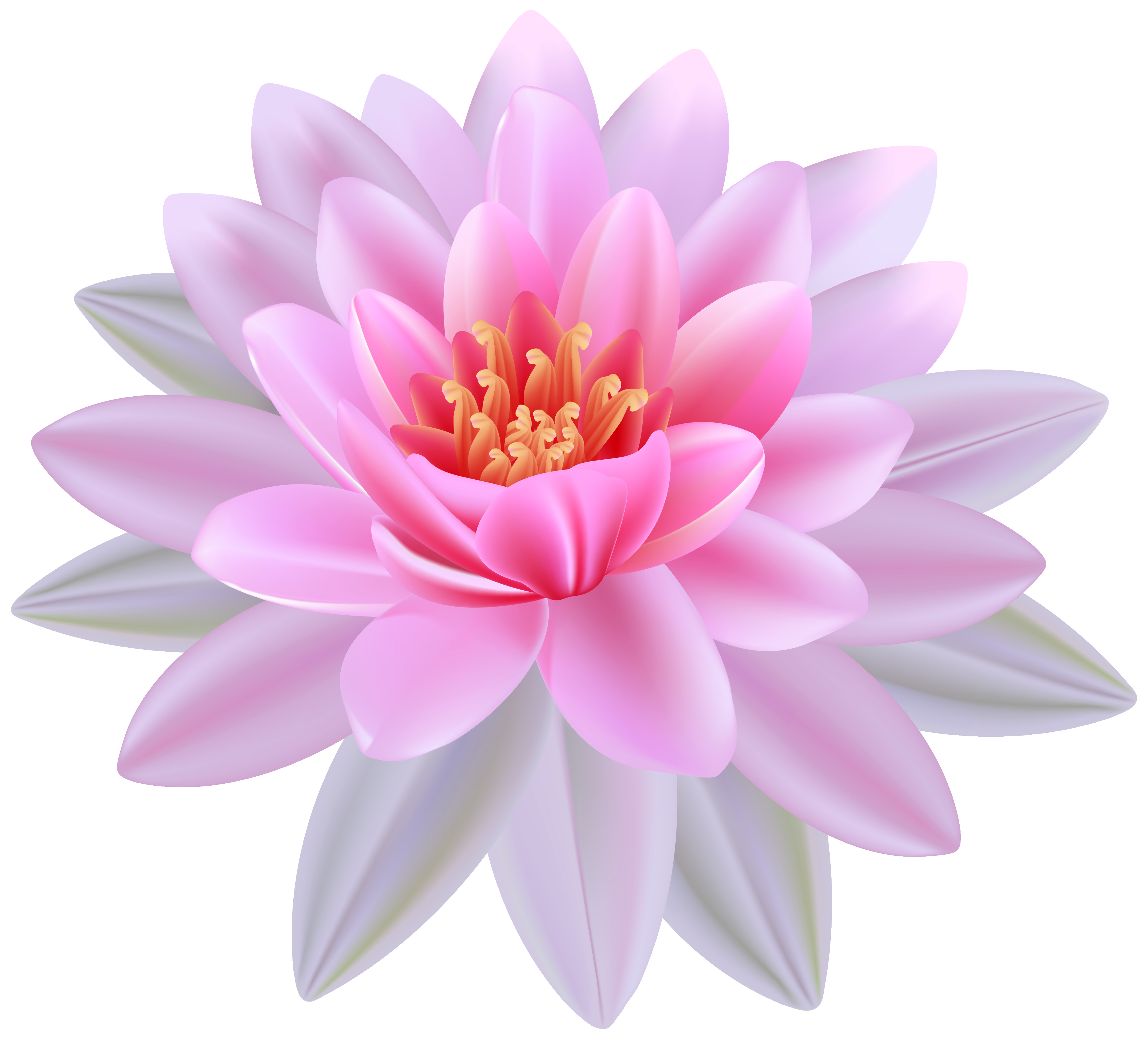 Pink Water Lily PNG Clipart Image.