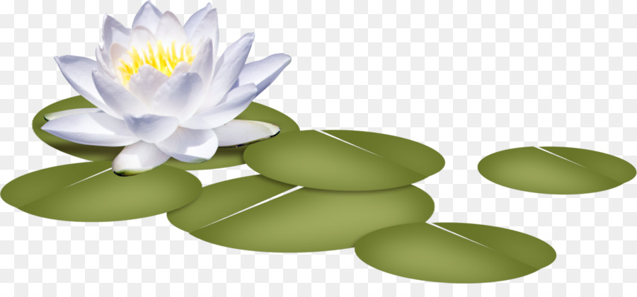 White Lily Flower png download.