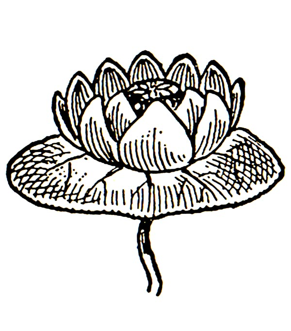 Water Lily Border Clipart.