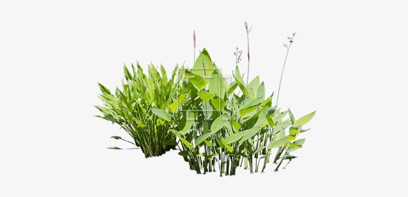 Bright Green Water Plants Cut.