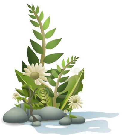 flowers plants water rocks.