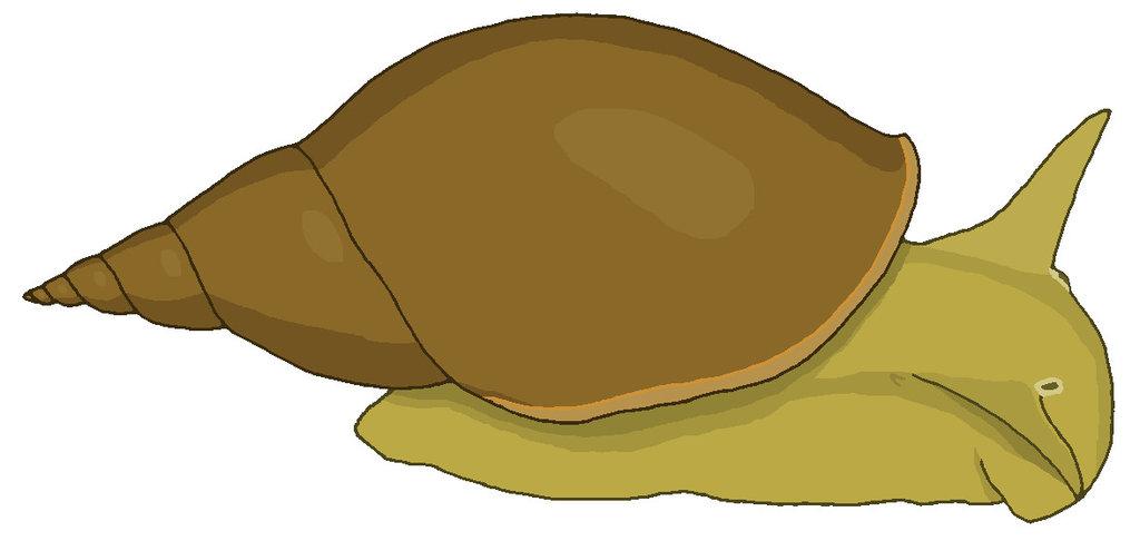 Pond snail by MisterBug on DeviantArt.