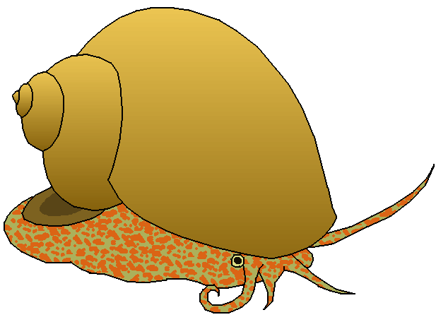 Clipart Of Snail.