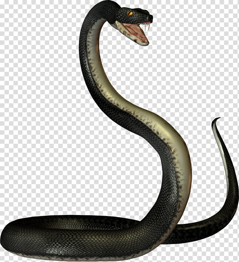 Black Snakes, black snake illustration transparent.