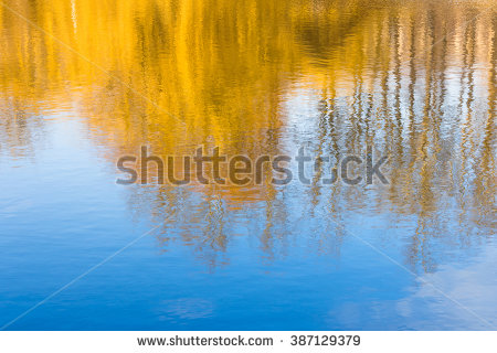 Tree Reflection Stock Images, Royalty.