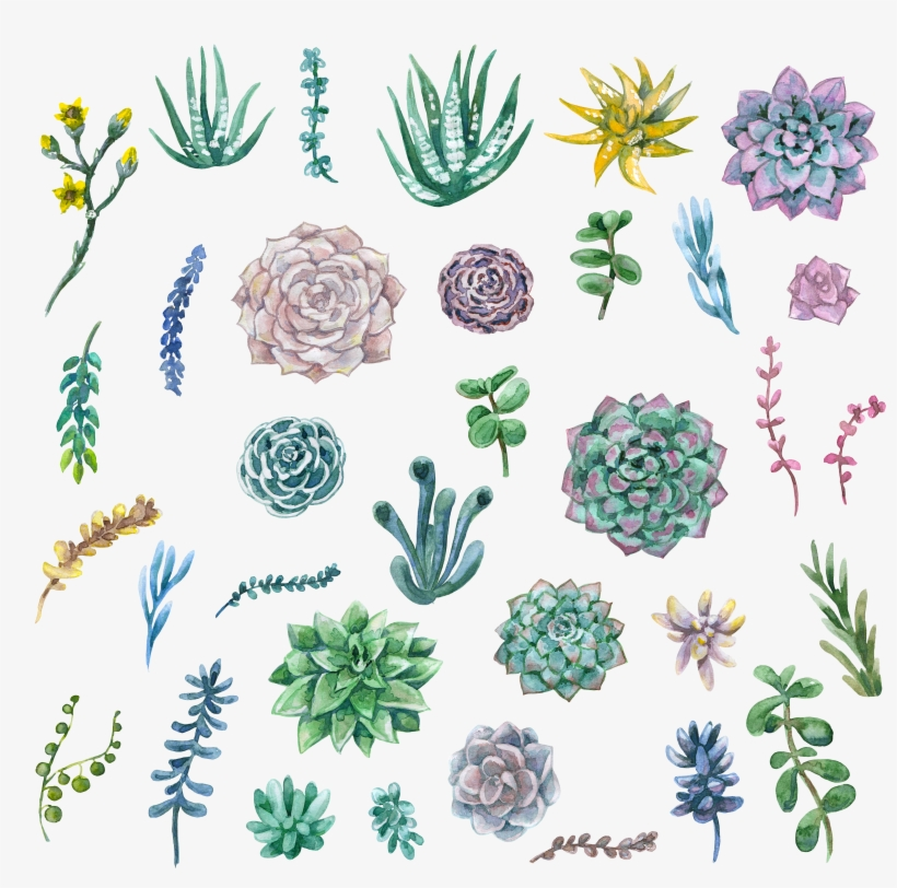 Succulent clipart water paint, Succulent water paint.