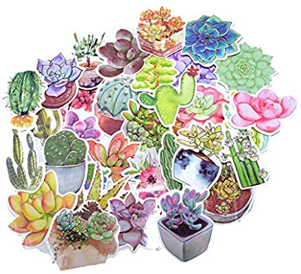 70 Pieces Cute Cactus Succulent Plants Designs Waterproof.