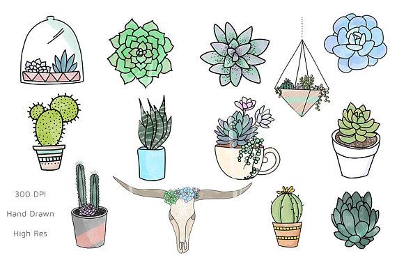 Succulent Clipart / Succulent PNG / Succulents / Clipart.