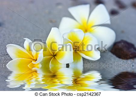 Picture of Flowers in water.