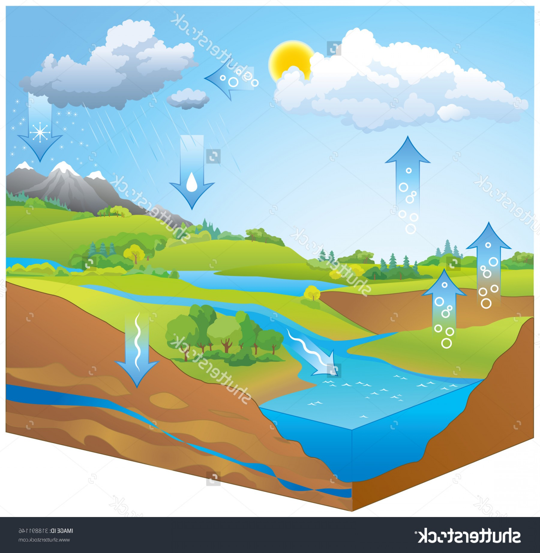 Free Stock Vector The Water Cycle Diagram Showing Precipitation.