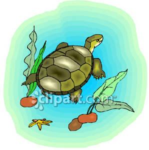 Under Water Turtle Clipart.