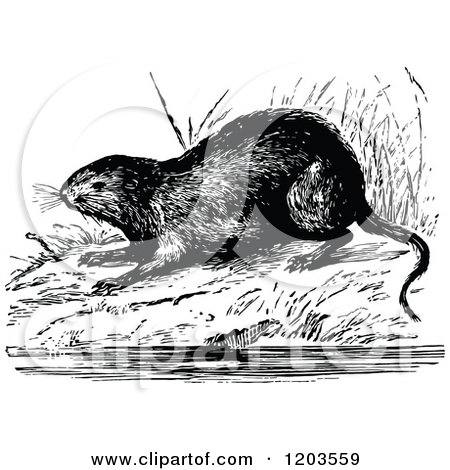 Cartoon of a Vintage Black and White Water Vole.