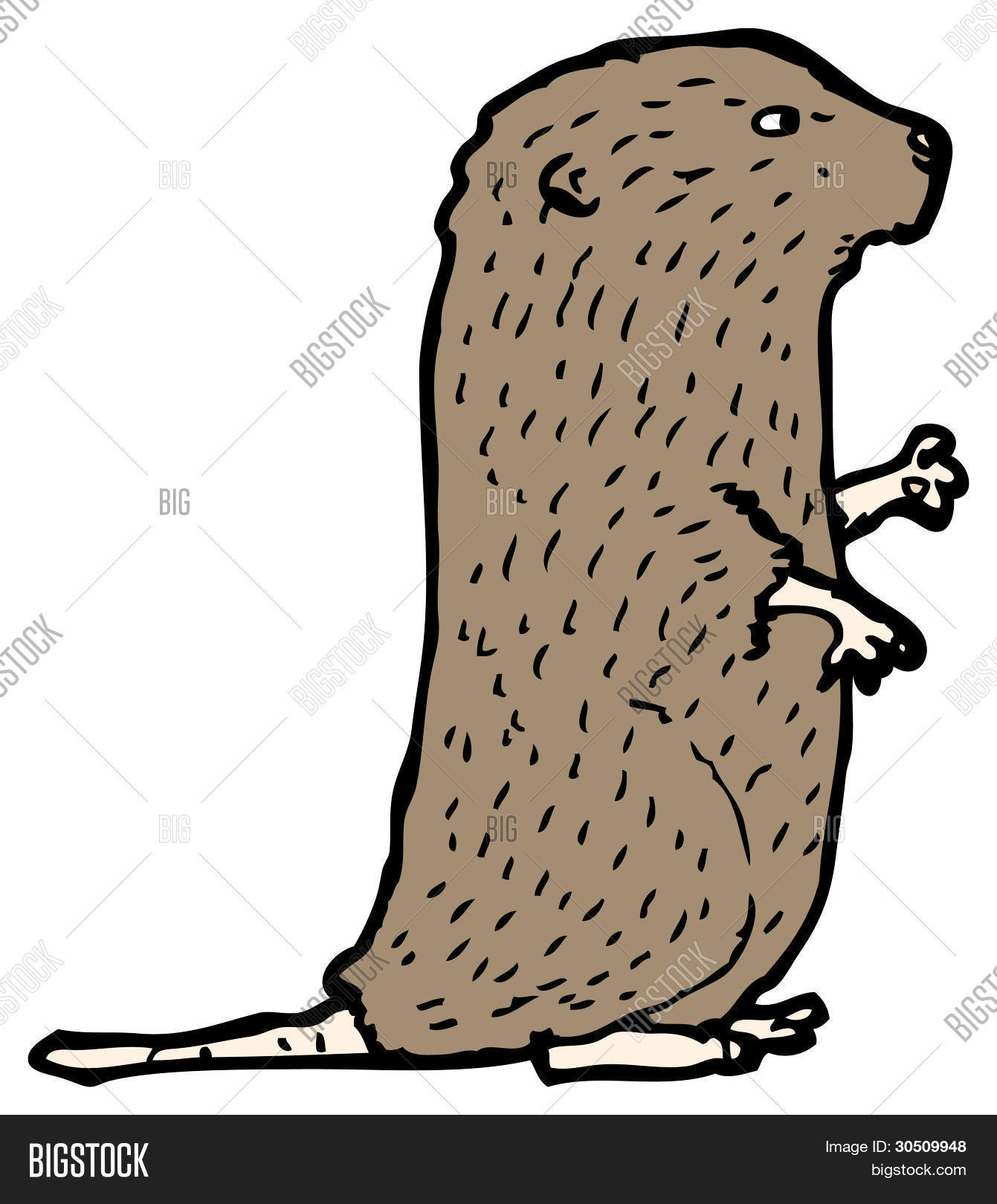 water vole cartoon Stock Photo & Stock Images.