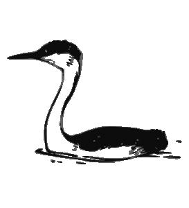 Waterbird Clip Art Download.