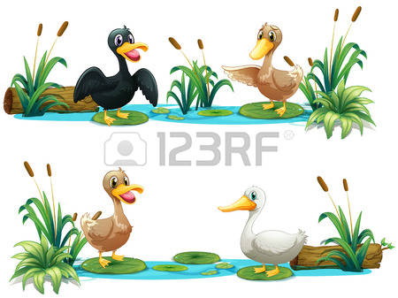 17,709 Water Bird Stock Illustrations, Cliparts And Royalty Free.