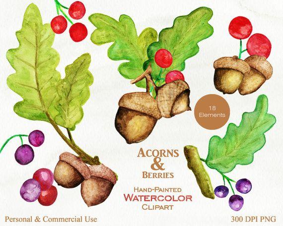 WATERCOLOR ACORNS Clipart Commercial Use Clip Art Autumn.