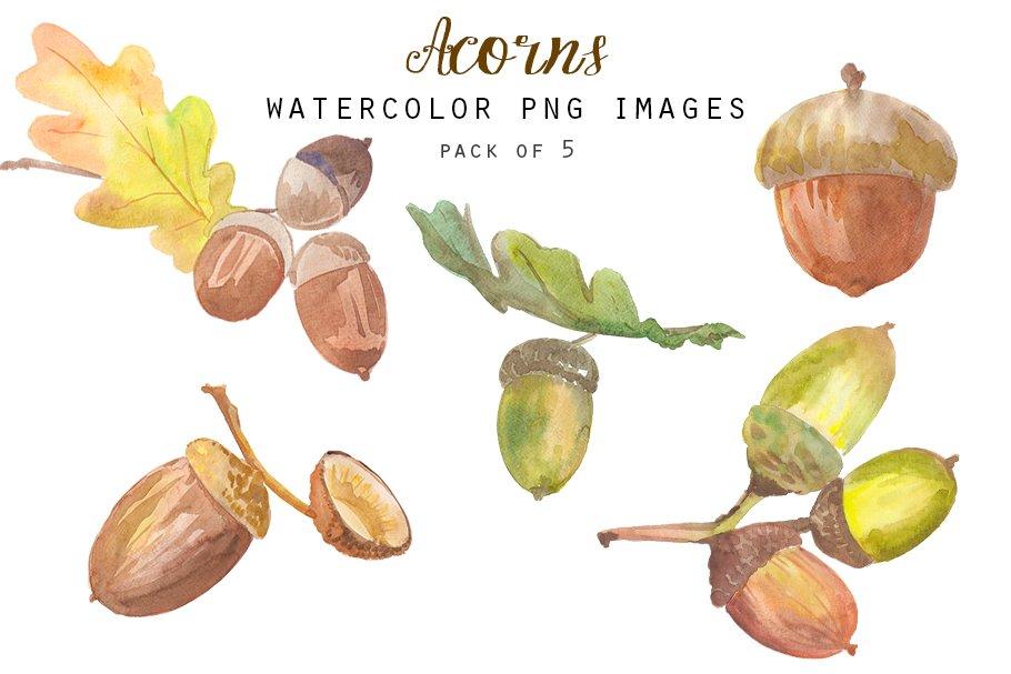 Watercolor acorns clipart.