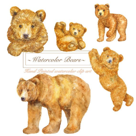 Watercolor Forest Brown Bears Clipart, Woodland Animal clip.