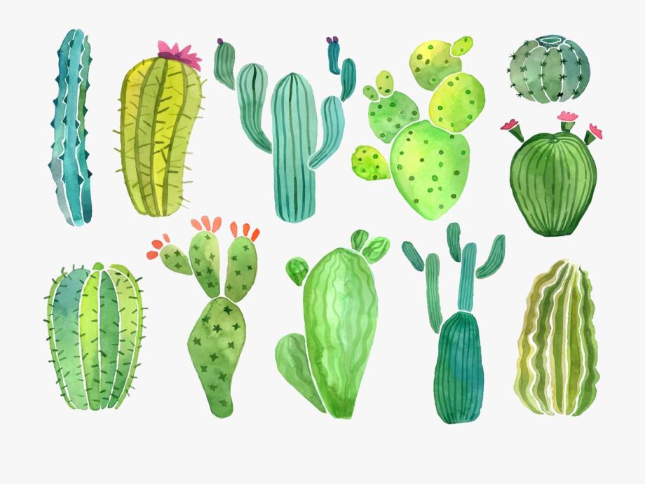 Cactus Clip Art Clipart Photo Transparent Png.