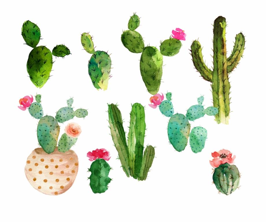 Cactus Flower Drawing.