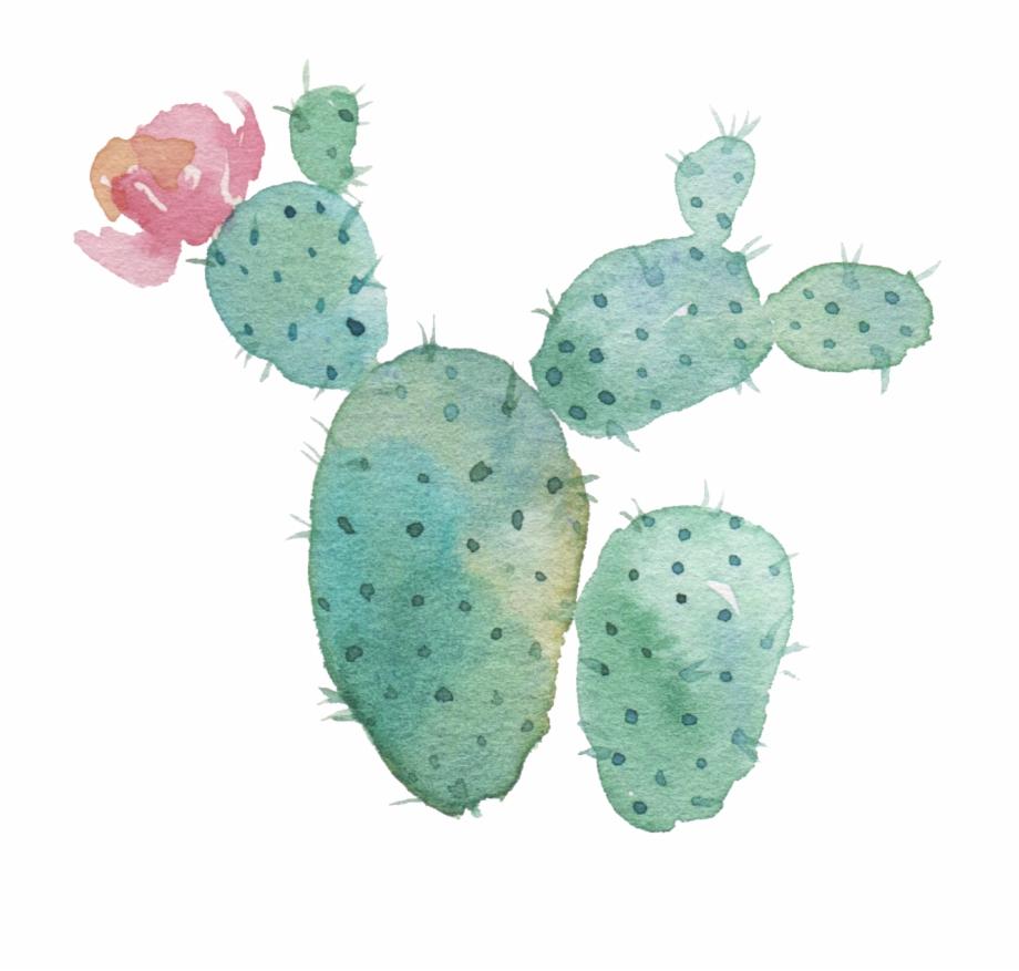 Watercolor Cactus Transparent Background , Png Download.